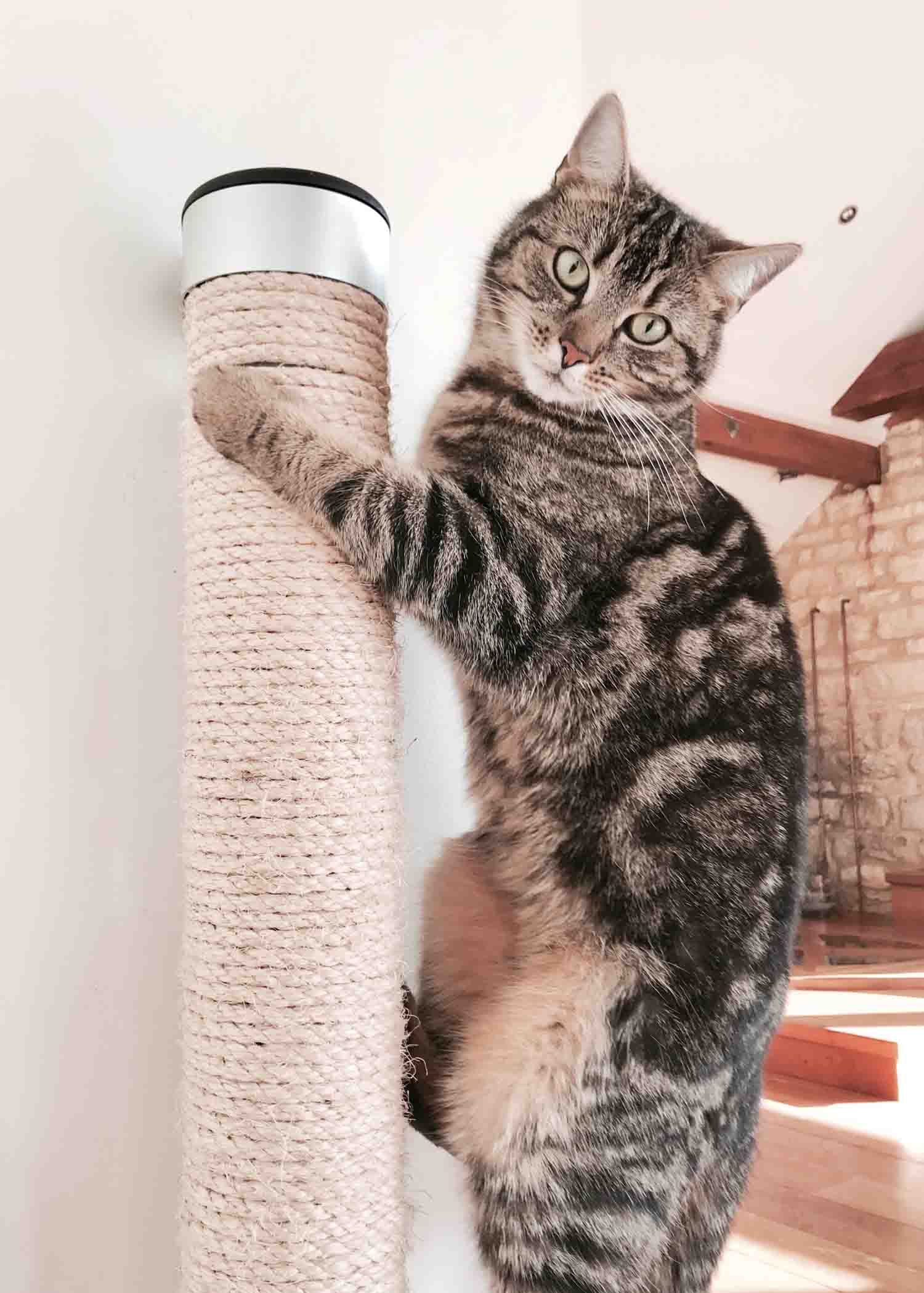 Catipilla cat climbing product scratcher