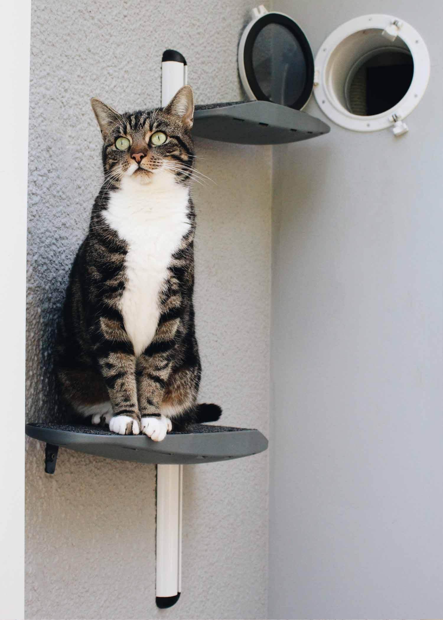 Catipilla pro cat climbing product