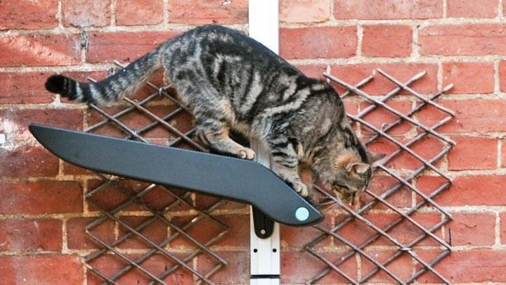 invention-cat-product-design