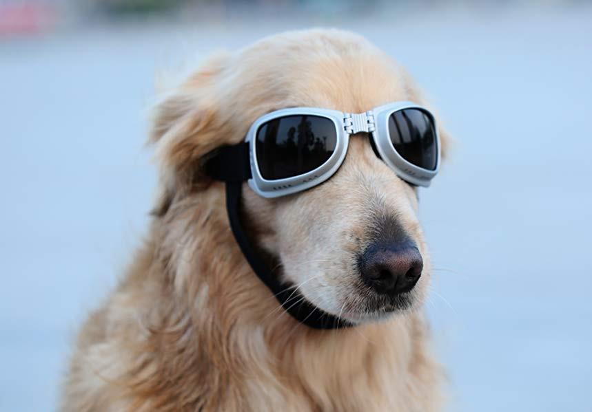 IR 1. Doggy Goggles